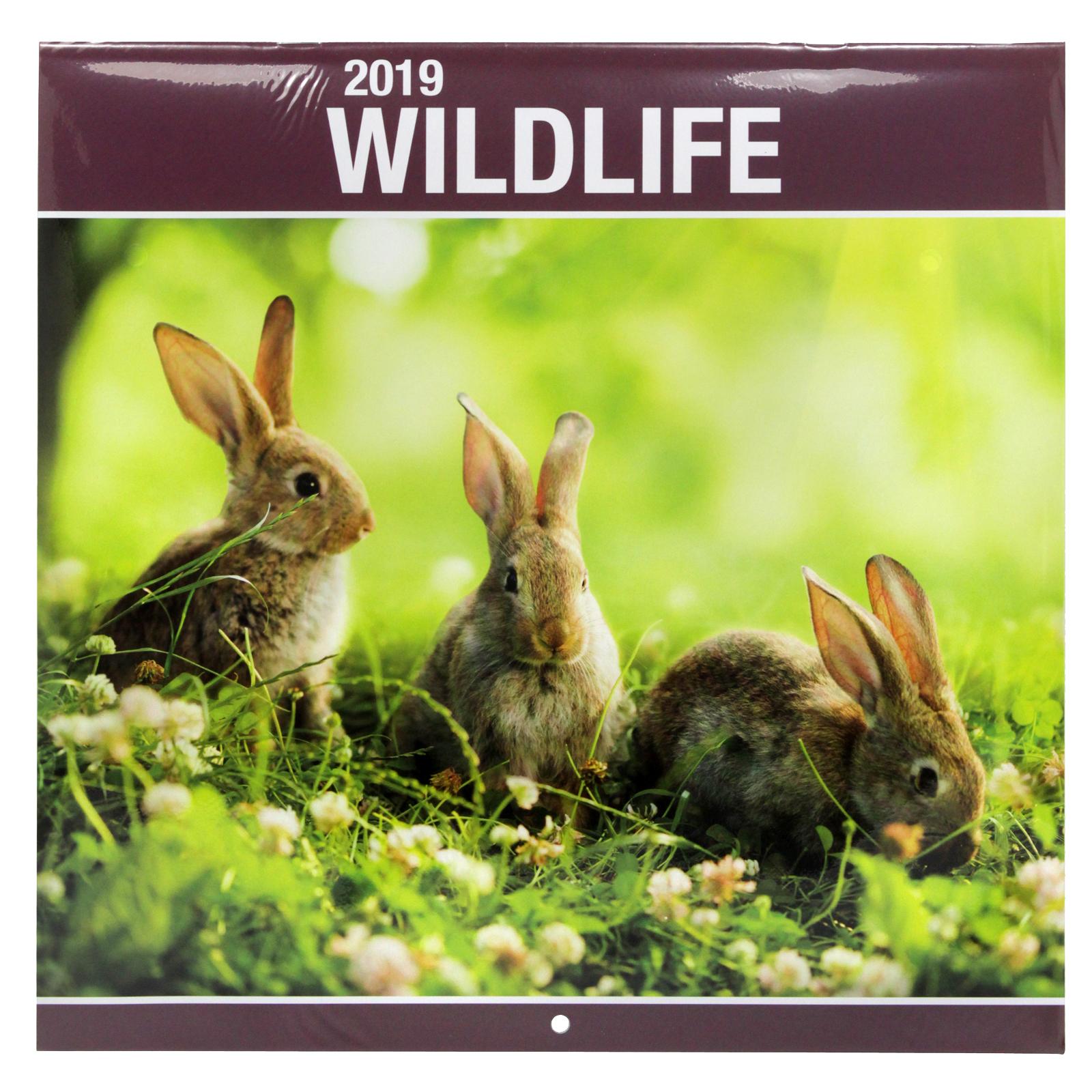 2019 SQUARE CALENDARS WILDLIFE+SCENIC LIFE X30